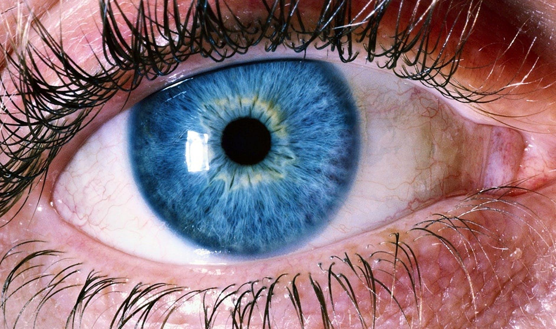 What is the Vestibular- Ocular Reflex (VOR)?